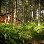 Forest Holidays, Sherwood